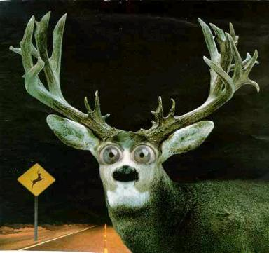 deer_in_the_headlights