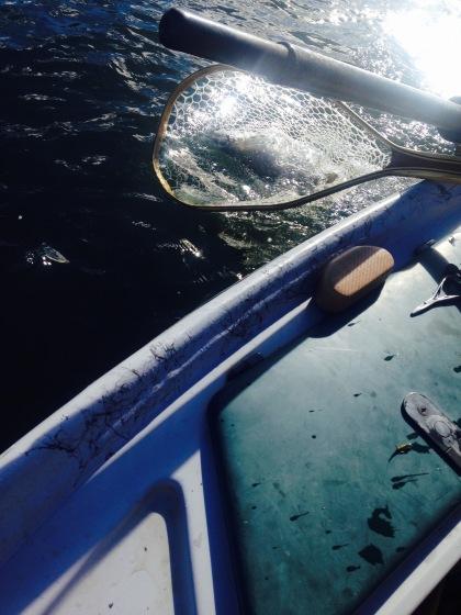 Fishing - 43