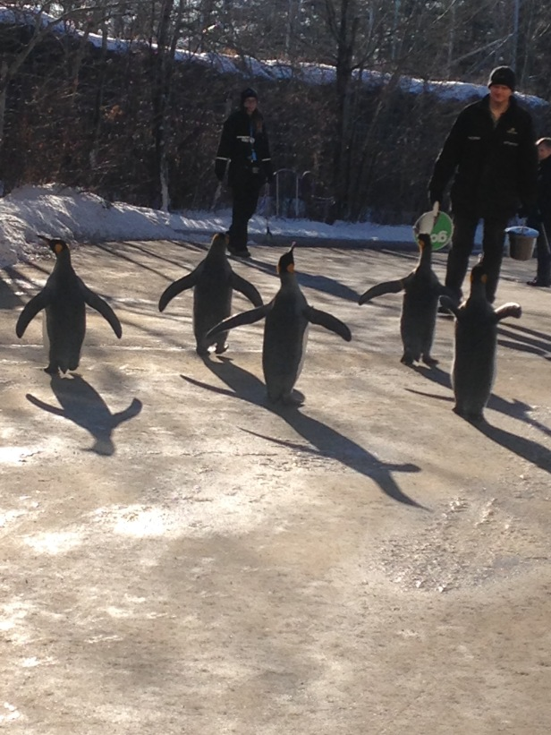 Penguins - 1 (3)