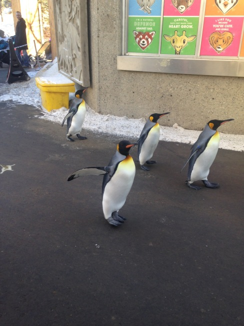 Penguins - 1