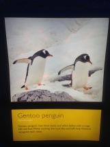 Penguins - 7