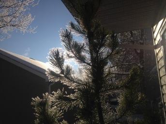 Snow - 6