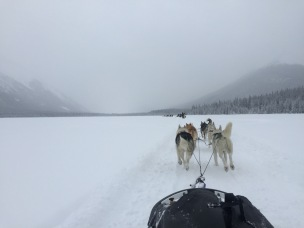dogsledding - 1 (3)
