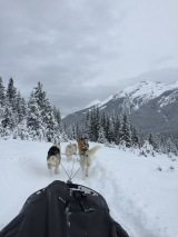 dogsledding - 19