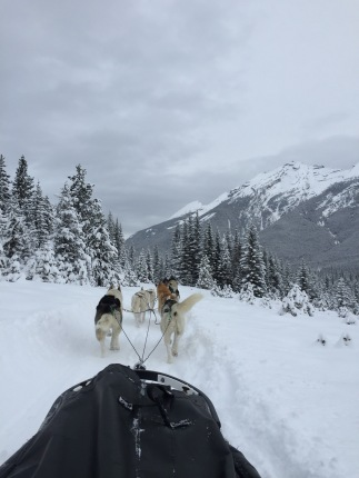 dogsledding - 19
