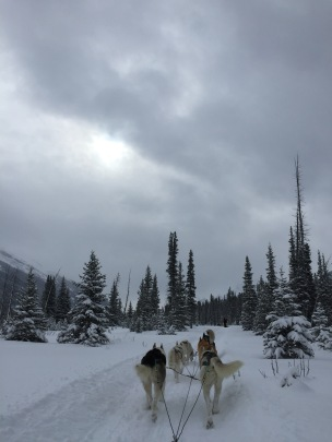 dogsledding - 23