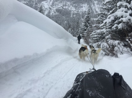 dogsledding - 31