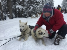 dogsledding - 34
