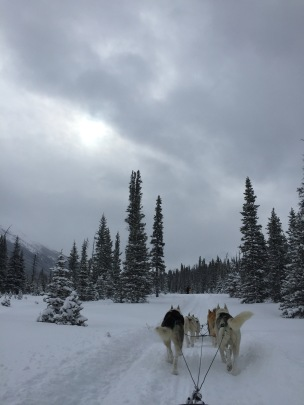 dogsledding - 4